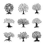 Beautiful oak trees silhouette set Stock Image