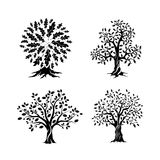 Beautiful oak trees silhouette set Royalty Free Stock Photo