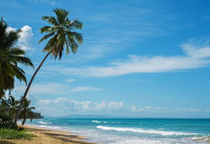 Beautiful ocean coast with tropic palms Royalty Free Stock Photography