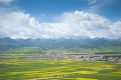 Beautiful ocean of flowers make Menyuan the heaven on earth. In July ,rape flowers were yellowing the fields.The brilliant shafts of sunlight burst through stock photos