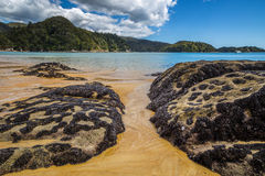 Beautiful ocean landscape with rocks covered in shells of black mollusks Stock Image