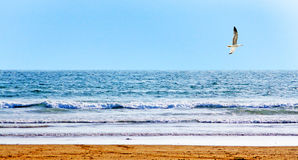 Beautiful ocean shore. With waves and a floating seagull Royalty Free Stock Photography
