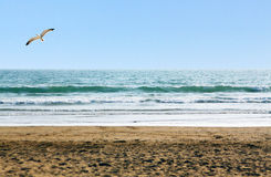 Beautiful ocean shore and a seagull above Stock Images