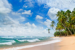 Beautiful ocean and tropical palm trees on the beach Stock Image