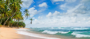 Beautiful ocean and tropical palm trees on the beach Stock Photography
