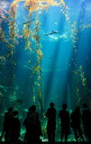 Beautiful ocean view and fish Stock Photos