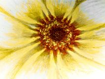 Oil painting of a daisy flower stock illustration