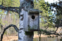 Beautiful old bird nest. Old birdhouse intent on a birch with moss and lichen on Royalty Free Stock Photo