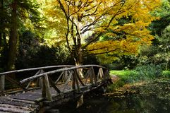 Beautiful old bridge over the lake in autumn colors Royalty Free Stock Image