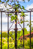 Beautiful, old garden gate with climbing ivy. In the summer Stock Images