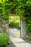Beautiful old garden gate covered with green ivy Stock Image