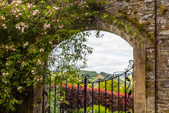 Beautiful, old garden gate with ivy and climbing roses. Beautiful, old garden gate with climbing roses Royalty Free Stock Photo