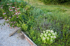 Herbal garden Stock Image