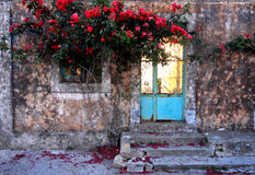 A beautiful old house entrance in Corfu, Greece. A beautiful old house entrance  with a rose colorfull rose bush in Corfu, Greece Royalty Free Stock Photo