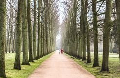 Old lime tree avenue in winter, two women walking in the distance. Beautiful old lime tree avenue in winter, two women walking in the distance royalty free stock photos
