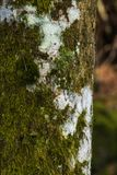 Moss covered tree trunk Stock Images