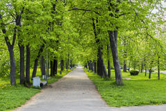 Beautiful old park in the city Stock Image