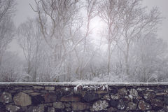 Beautiful old stone wall in front of misty winter forest