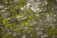 Beautiful old stone wall with green moss background Royalty Free Stock Photo