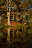 Beautiful old tree in autumn Stock Photos