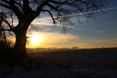 Beautiful old tree in the beautiful sunrise Royalty Free Stock Image
