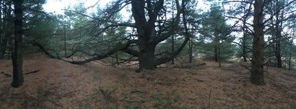 Beautiful old tree stock photos