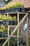 Beautiful old vintage potting shed exterior detail in English co Stock Image