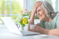 Beautiful old woman with a laptop Stock Images
