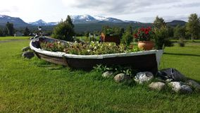 Beautiful old wooden boat flowerbed with majestic diverse flowers with snowy mountain background. Majestic colorful flowers in old wooden boat flowerbed in stock photography