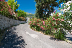 Beautiful oleander flowers on a Greek street Royalty Free Stock Image