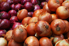 Beautiful onions. Two kinds of beautiful onions in the market Stock Photo