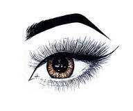 Beautiful open female eye with long eyelashes is isolated on a white background. Makeup template illustration. Sketch Royalty Free Stock Photos