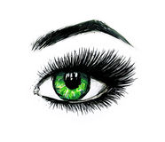 Beautiful open female green eye with long eyelashes is isolated on a white background. Makeup template illustration Stock Images