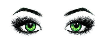 Beautiful open female green eyes with long eyelashes is isolated on a white background. Makeup template illustration. Color sketch. Felt-tip pens. Handwork Stock Photography