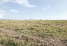 Beautiful Open Grassland of Ol Pejeta Conservancy, Kenya Royalty Free Stock Image