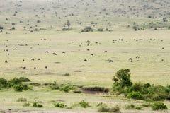 Beautiful open savanna of Masai Mara with grazing sporadic wildlife Royalty Free Stock Photos