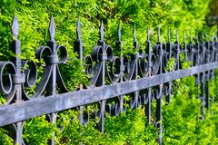 Beautiful openwork metal fence near the green thuya wall. Wrough. T-iron fence with background of green branches of thuya. Decorative cast iron fence Royalty Free Stock Photos