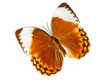 Beautiful orange butterfly royalty free stock photography