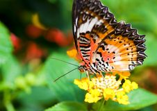 Beautiful orange butterfly Stock Photo