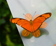 A beautiful orange butterfly Stock Images