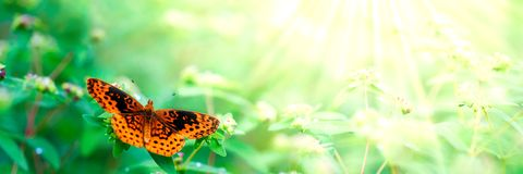 Beautiful Orange Butterfly. On flower plants in the summer royalty free stock photography