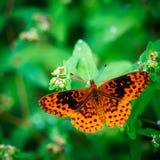 Beautiful Orange Butterfly. On flower plants in the summer stock photo