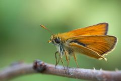 Beautiful orange butterfly Royalty Free Stock Images
