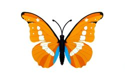 Beautiful orange butterfly. Beautiful orange colored butterfly isolated over white royalty free stock photos