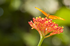 Beautiful Orange Butterfly on Colorful Flower Stock Photo