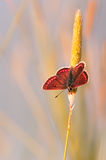 Beautiful orange butterfly on grass at dawn. Stock Photo