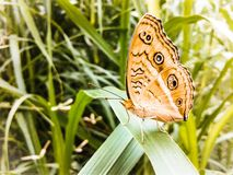 beautiful orange butterfly on green leaf. Stock Photos