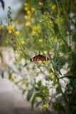 A beautiful orange butterfly Royalty Free Stock Photo