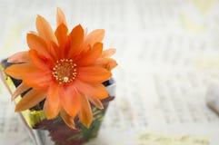 Beautiful orange cactus flower Stock Photos