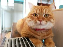 Beautiful orange cat rests on the table beside the air box stock image